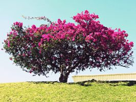 Pink Tree by Juandii
