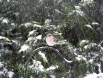 Mockingbird-  In the Snowstorm by watercolos