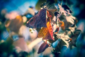 Leaves of Winter by faisalh