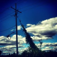 Vines on the Line by ArizaonaRose