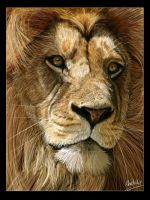 Lion portrait by Geirahod