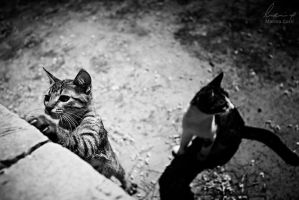 Little Fellas II by MarinaCoric