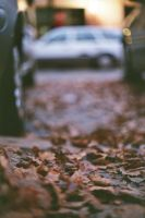 autumn leaves by daPerforM