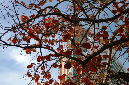 seen through the red leaves by sporto