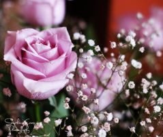 Delicate by LillieMoon