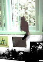 LOLy at the window by kXn