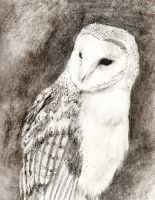 Barn Owl 2010 by El-i-or