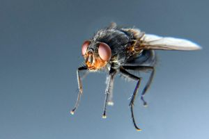 Hovering fly by maarten1982