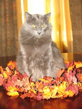 Kitty Fall Centerpiece by frankensusan