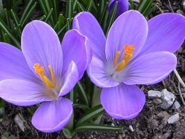 Spring Color by photowizard