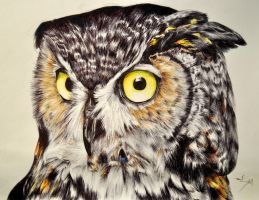 Great Horned Owl by ninjagirl4evs