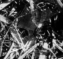 Web by DrowningSignificance