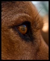 dog eye by babigrip