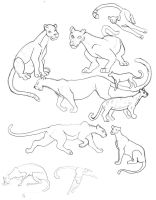 More Big Cat Practice by Sontine