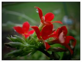 Spring..........red flowers by gintautegitte69