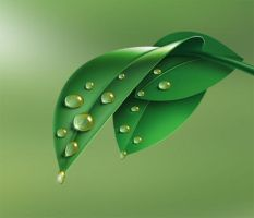 Leaf Drops by mustafacamurcu