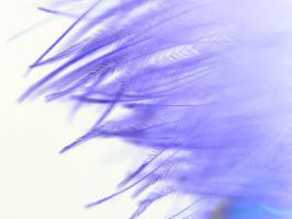 Purple Feathers by CatherinetteRings
