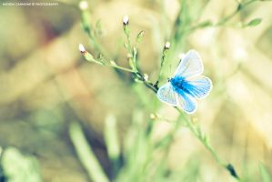 Blue Butterfly by michelecannone