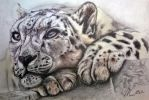 Snow Leopard by navmun6485
