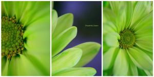 Cheerfully Green by raverqueenage