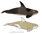 Cappuccino/Antartctic Orca: Adoptions for Ninuturu by WeisseEdelweiss
