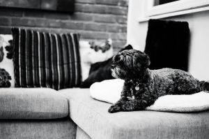 Black And White Dog Lacey FILM by Samuel-Benjamin