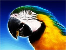 Fractal Parrot 2 Wallpaper by PimArt