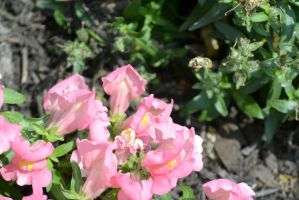 Flying Pollinator In the Air by Miss-Tbones