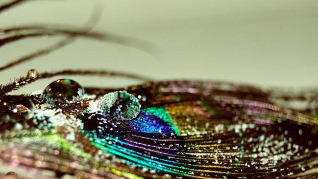 peacock feather 1 by wntrb