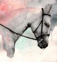 White Horse Study by SonicJalopy