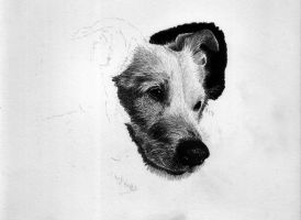 Dog wip 1 by orinoco1973