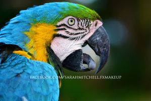 Blue/Yellow Macaw by sarahmitchellmakeup
