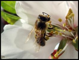Bee One. by pukingpastilles