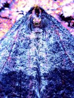 Horrible Cloaked Mohican Moth Monster by SrTw
