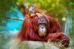 Orangutans Color by severianofilho