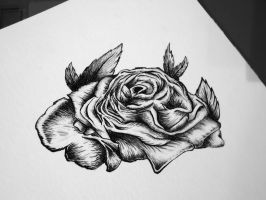 ROSES by Chimik