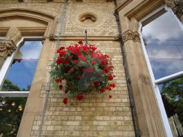 Red Flowers of Oxford by Tatmione