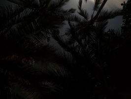 palms at midnight by two-ladies-stocks