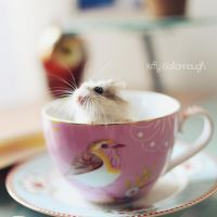 Teacup. by kittysyellowjacket