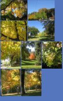 Pack fall trees yellows by CotyStock