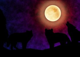 night of wolfs by angelonnie