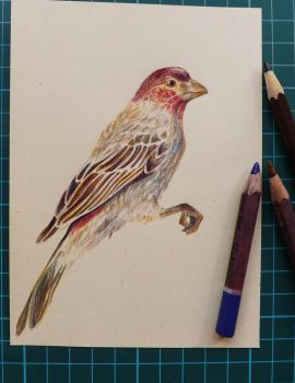 Red-head sparrow by masktoblack