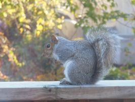 Photography - Squirrel 2: Side by watermelemon