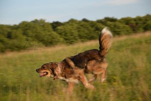 Running Dog by D3PRO