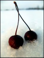 Snowberry by dolly41