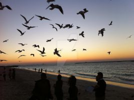 Birds on the horizon of Jumeriah by B3cKStAgE