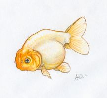 Ranchu Goldfish by Joceweir