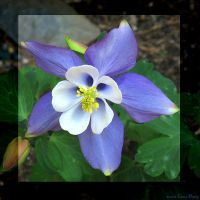 Columbine by Tranquil-Insanity