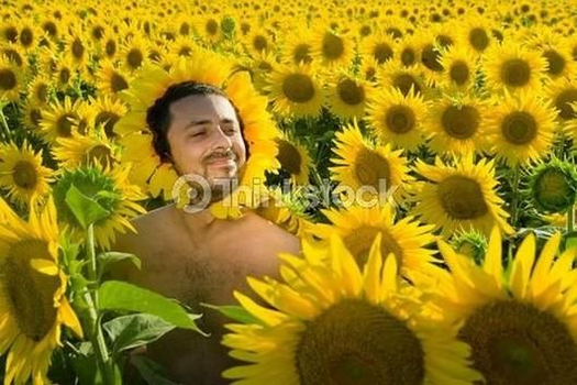 Stock Photo Of A Sunflower In A Sunflower Field by alexlion0511