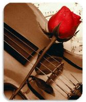 violin and rose by violonsong